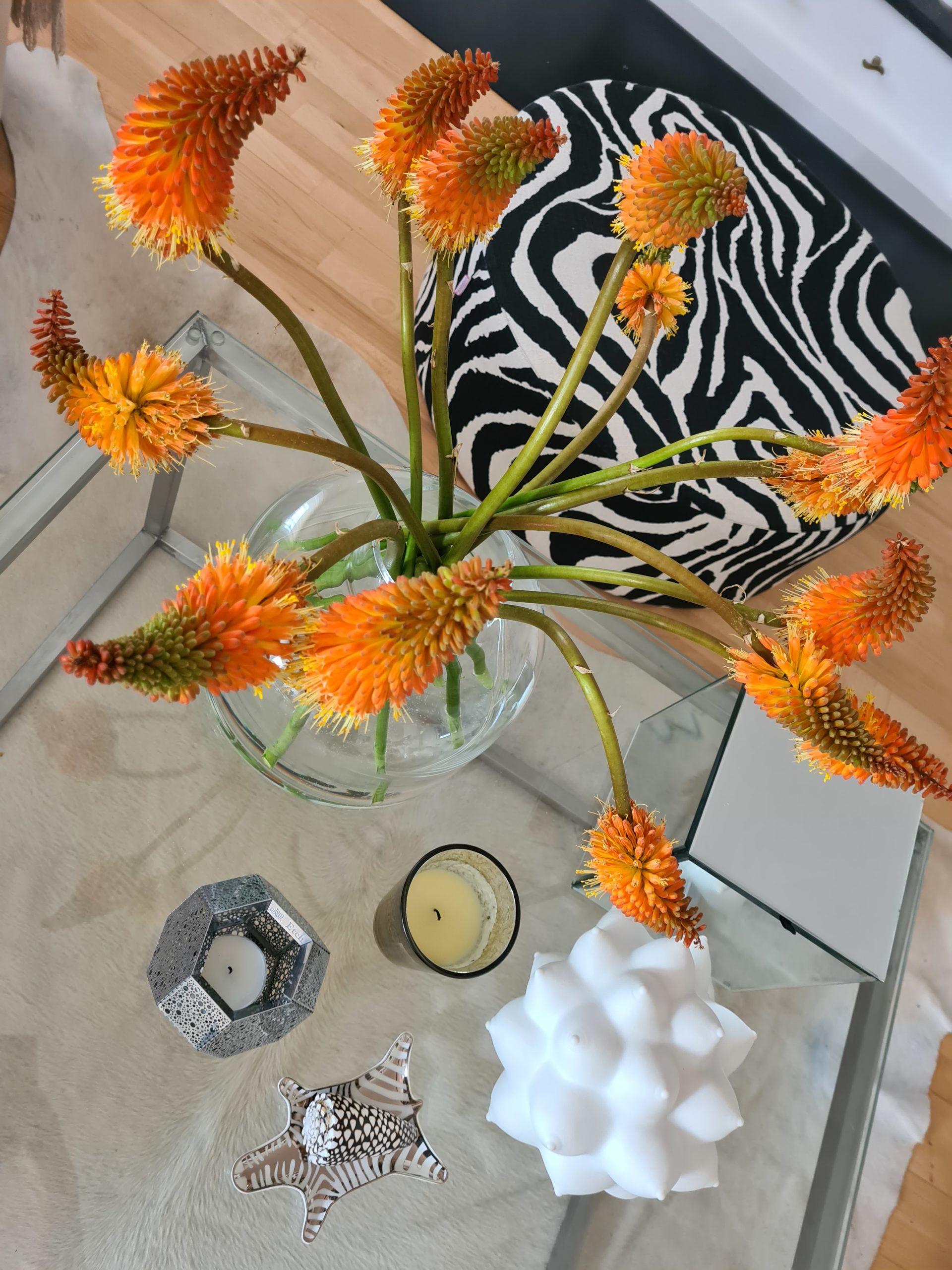 20200811 093303 scaled Blommor och Bubbel Uncategorized Uncategorized Eddie Fischer Living a Style